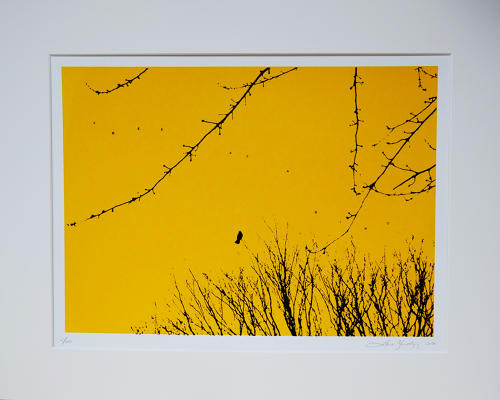 Lene Bladbjerg - Free as a Bird